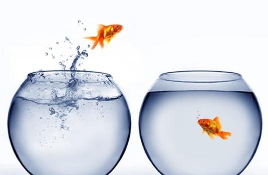 zmiana-ryba1
